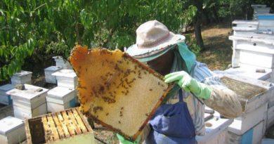 Национален протест на пчеларите, искат подкрепа от държавата