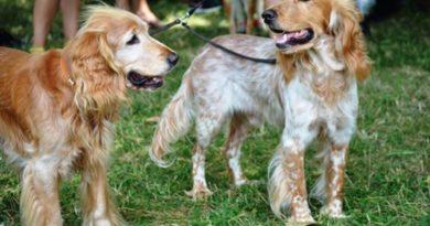 Кучешки парад