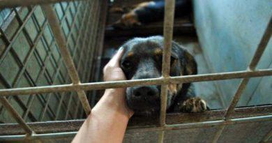 куче в клетка