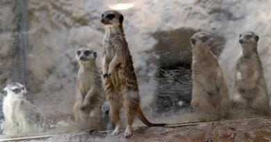 Зоопаркът на София с вход свободен на 1 юни