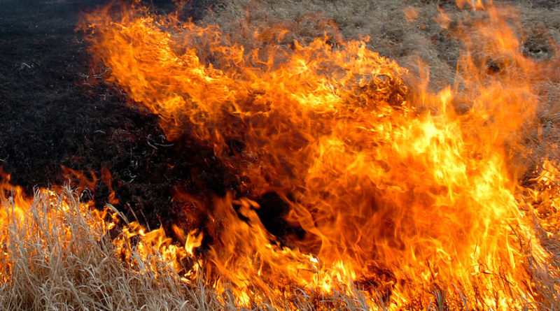 Голям пожар избухна в гора над Карлово
