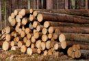 20% по-скъпи  дърва за огрев във Велико Търново